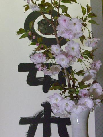 Sakura3_2