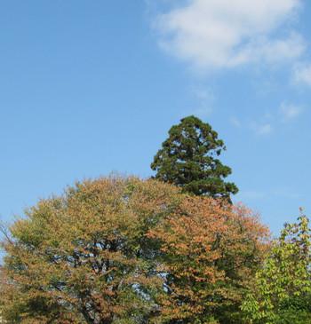 Sakuramomoti